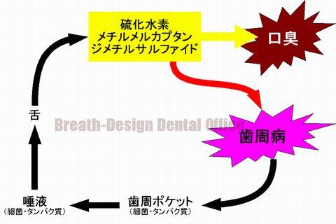 口臭ガスが歯周病の原因!?